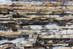 石灰石和dolostone纹理 库存图片