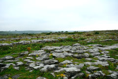 石灰石, Burren国家公园,爱尔兰 免版税库存图片