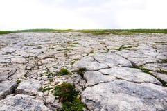 石灰石Barrens,花小海湾 库存照片