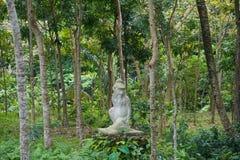 石猴子雕象巴厘岛样式 库存照片
