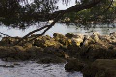 石的岸 库存图片