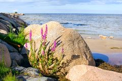 石的海滩 库存图片