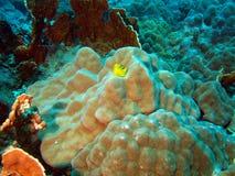 石的珊瑚 免版税库存照片