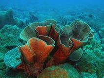石的珊瑚 库存照片