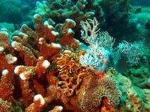 石的珊瑚 库存图片
