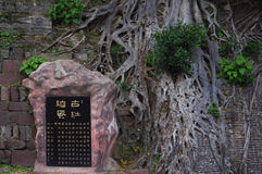 石碑和印度榕树 图库摄影