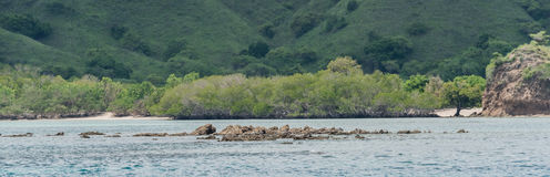 石礁石从接近岸Singapur的海水看  免版税图库摄影