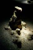 石笋和flowstone在洞 库存照片