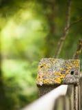 石篱芭和被弄脏的森林背景 库存图片
