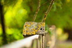 石篱芭和被弄脏的森林背景 免版税图库摄影