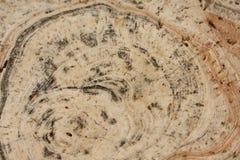 石纹理特写镜头背景 免版税图库摄影