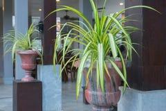 石罐的美丽的植物在豪华旅游胜地 免版税库存照片