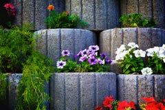 石花圃墙壁 库存图片