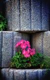 石花圃墙壁 免版税库存照片