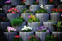 石花圃墙壁 图库摄影