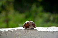 石英Geode石头 免版税库存照片