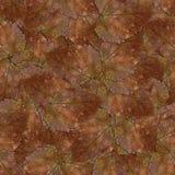 石莓果叶子无缝的背景样式纹理设置了1 免版税库存照片