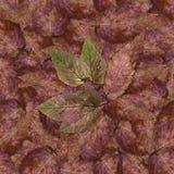 石莓果叶子无缝的背景样式纹理设置了1 库存图片
