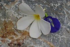 石表面上的白色和violete花 免版税库存照片