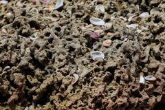 石表面充分微小的白色贝壳 免版税库存图片