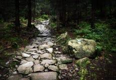 石走道在密集的森林里 库存照片