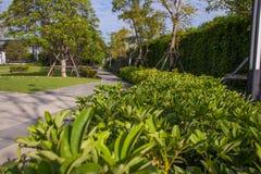 石走道在绿色庭院里 免版税库存照片