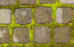石走道有绿色青苔背景 绿色青苔增长在路的砖之间 免版税库存图片