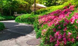 石走道绕在春天正式花园里 库存图片