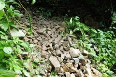 石足迹在泰国的森林里 免版税库存照片