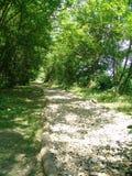 石路在森林里 免版税库存照片