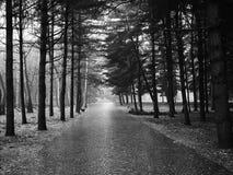 石路在森林里 库存图片