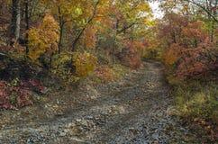 石路在秋天森林里 免版税库存照片