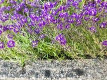 石边界和淡紫色花 免版税库存照片