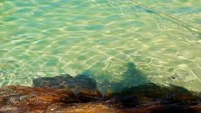 石近的海滩和绿松石海软的波浪 股票视频