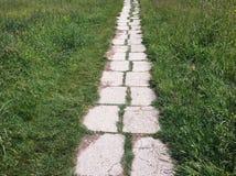 石道路和绿草在庭院里 在草的石瓦片 免版税库存照片