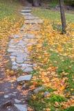 石道路和黄色下落的叶子在地面上在城市pa 库存图片