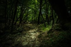 石道路在密集的厚实的绿色森林,修道院东哥特,Monten里 库存图片