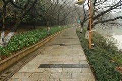 石道路在植物园里 免版税库存照片