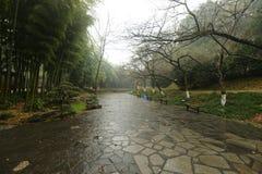 石道路在植物园里 免版税库存图片