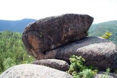 石顶头绵羊 库存照片