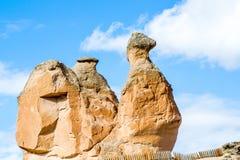 石骆驼 免版税图库摄影