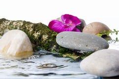 石头、一朵花和一个树枝的构成在水中 免版税库存图片