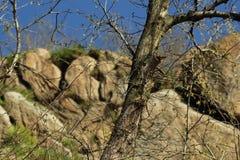 石头、树和天空 免版税库存图片