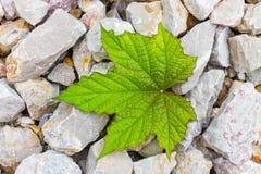 石头和叶子-背景 免版税库存图片