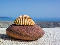 石头和壳在海岸 库存照片
