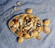 石头和壳 库存照片