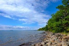 石头和树由岸 免版税库存图片