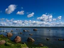 石头和海藻 库存照片