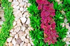 石头和草在庭院里 免版税图库摄影