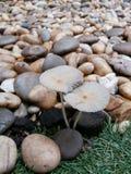 石头和蘑菇 免版税库存图片